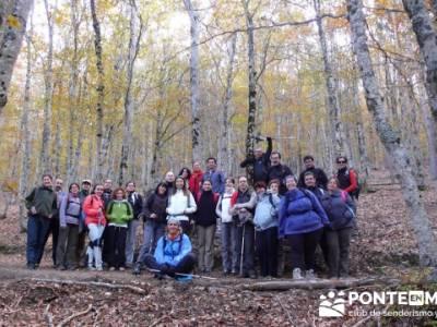 Grupo de senderismo desde Madrid, Parque Natural del Hayedo de Tejera Negra; senderismo guadarrama